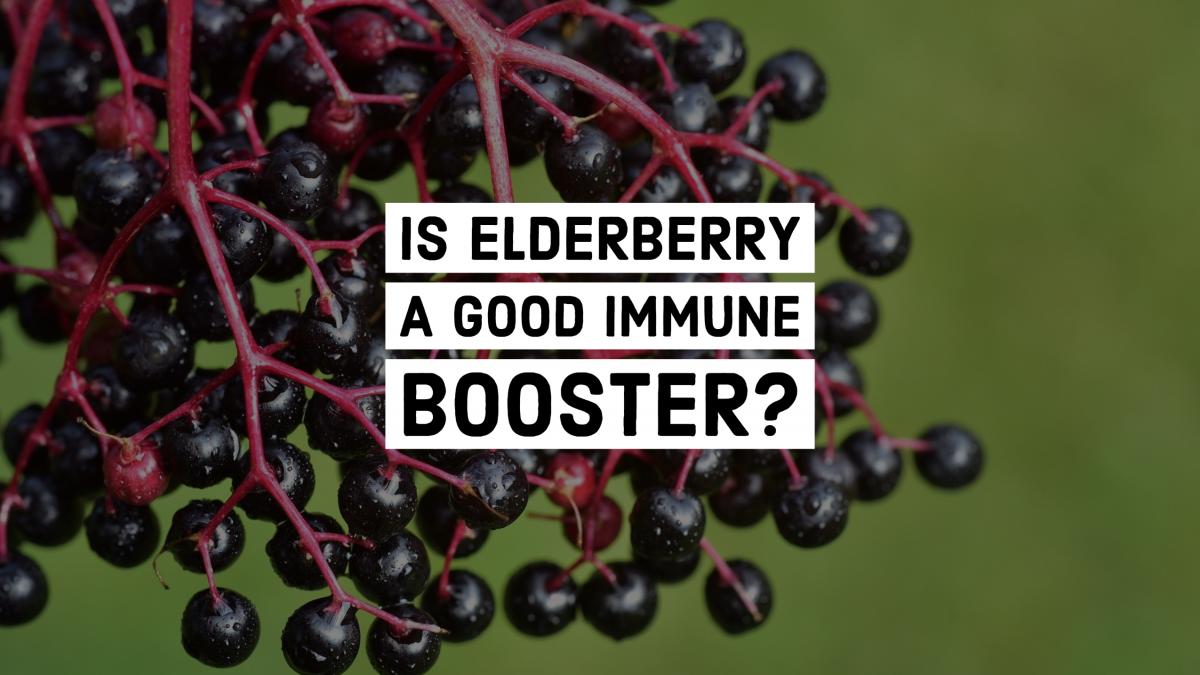 Is Elderberry a Good Immune Booster