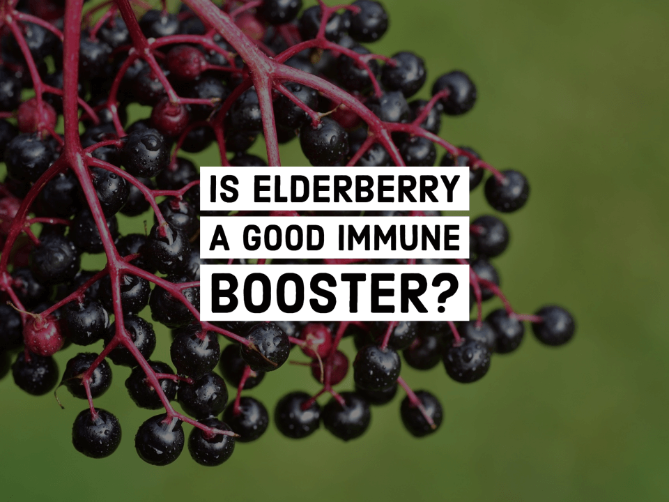 Is Elderberry a Good Immune Booster