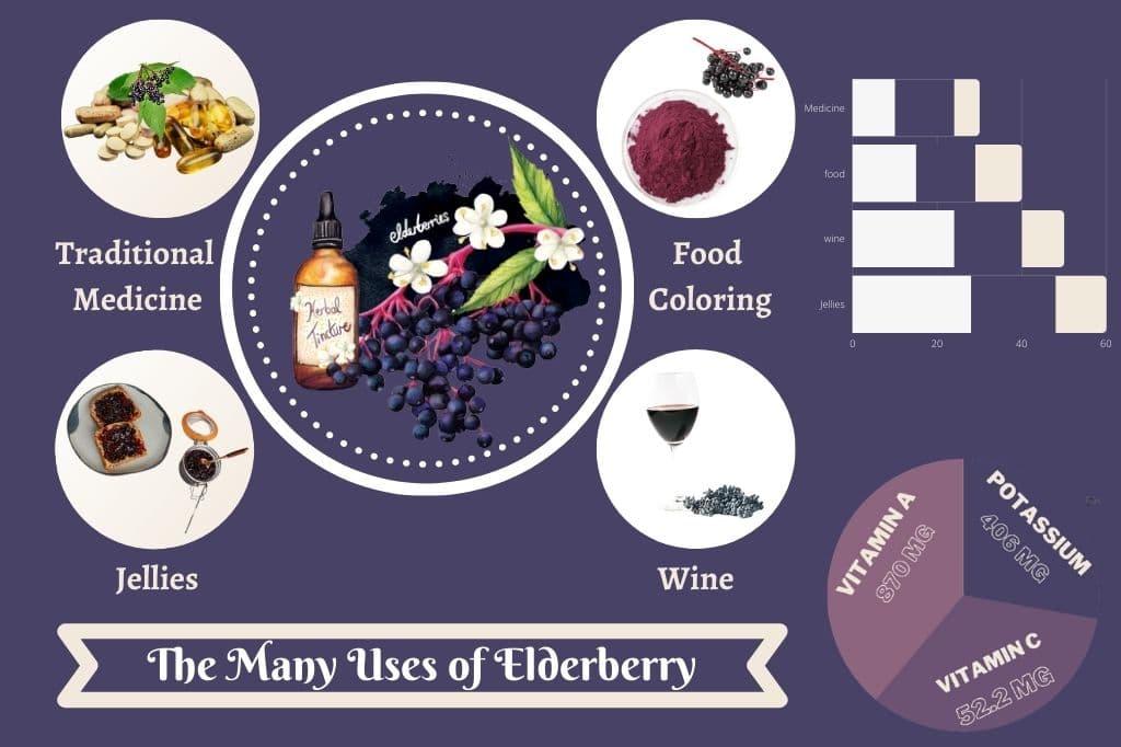 Uses of Elderberry