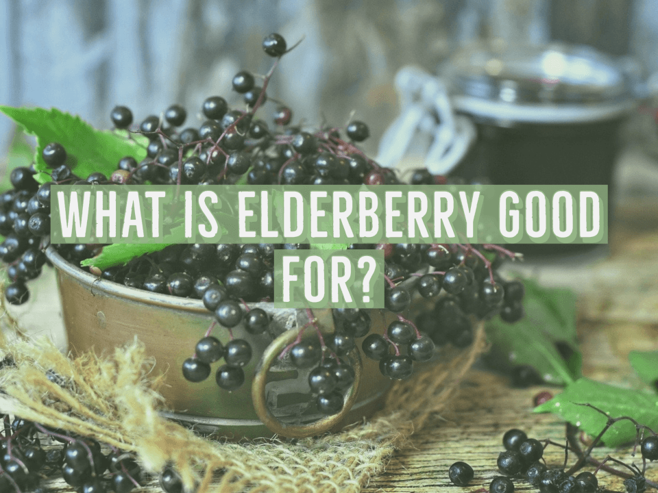 What is Elderberry Good for