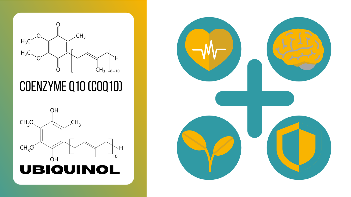 Benefits of Coq10 and Ubiquinol