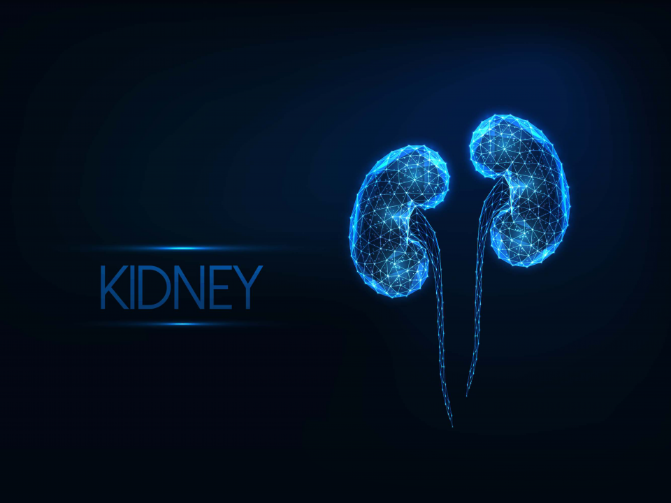 What Vitamins Are Good for Kidneys