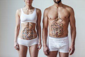 Probiotics Help Digestive System